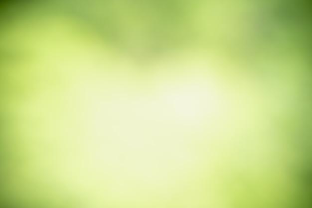 Samenvatting vage onscherp en vage groene bladachtergrond onder zonlicht.