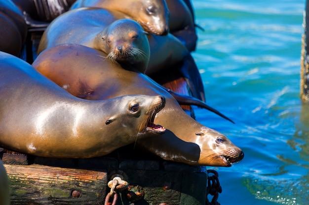 San francisco pier 39 vuurtoren en zeehonden californië