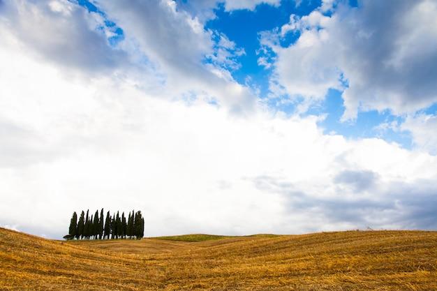 San quirico, d'orcia, toscane. een groep cipressen net voor de stormaankomst
