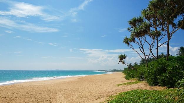 Sandy verlaten paradijs strand met palmbomen op de oceaan