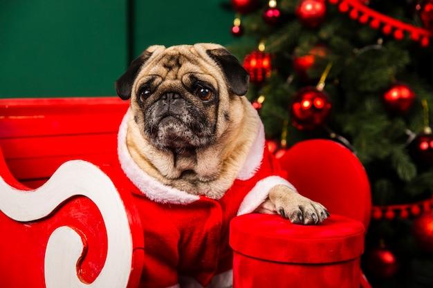 Santa kleine helper binnenlandse hond