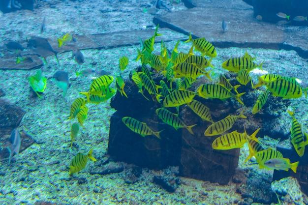 Sanya, hainan, china - 20 februari 2020: een grote verscheidenheid aan vissen (meer dan 500 soorten vissen, haaien, koralen en schaaldieren) in een enorm aquarium op het eiland hainan.