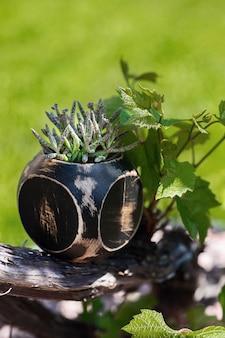 Sappig in de houten zwarte bloempot in de tuin