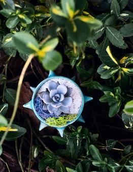 Sappig in de oogopslag blauwe bloempot tussen groen-gele bladeren van berberisstruik