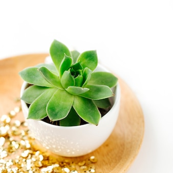 Sappig in pot met gouden confetti op witte achtergrond.