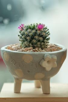 Sappige cactus in een keramische pot