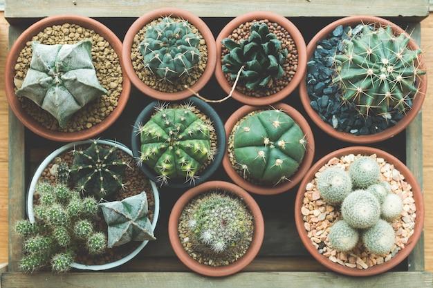 Sappige cactus in houten kist