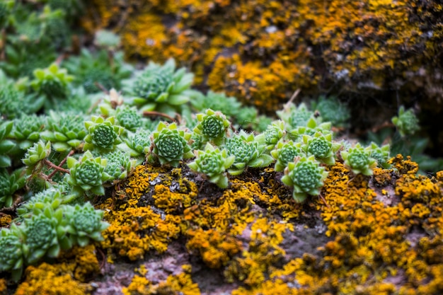 Sappige close-up en macro, groene, gele en paarse kleur