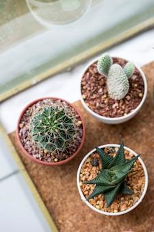 Sappige potten voor thuis of op kantoor