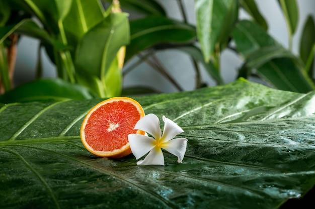 Sappige verse rode grapefruit met plumeriabloem op een groen blad. gezonde levensstijl en spa