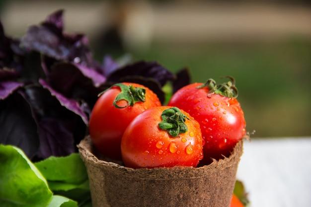 Sappige verse tomaten in papier emmer, ingrediënten voor de zomer salade.