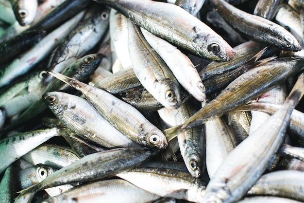 Sardines bij de antenne van de vissenmarkt