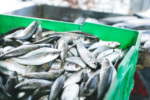 Sardines te koop in container