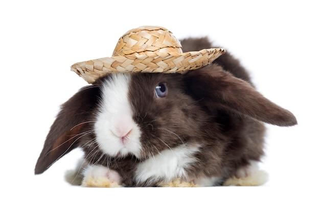 Satijn mini snoeit konijn geconfronteerd met een strooien hoed, geïsoleerd op wit