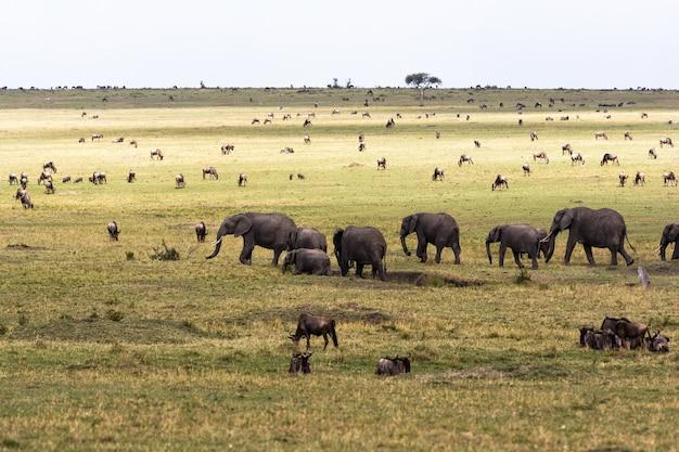 Savannah met grote en kleine herbivoren