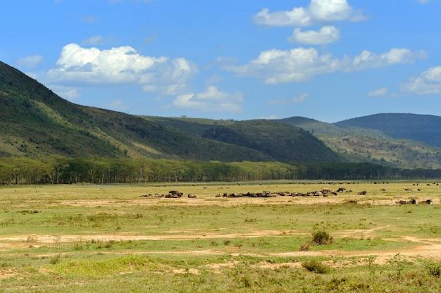 Savanne in nationaal park van afrika, kenia