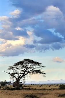 Savannelandschap in het nationale park van kenia