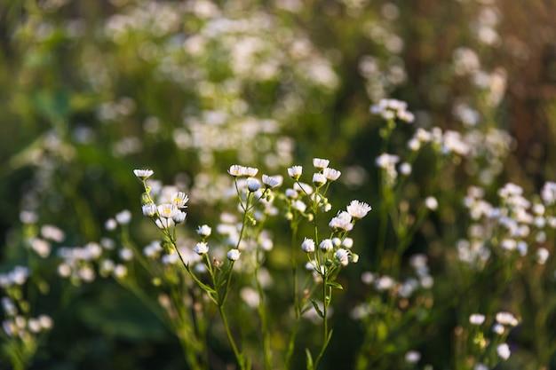 Scène met wild gras op een zonlicht