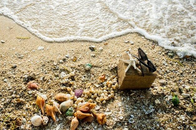 Schaaldieren op het zand en zeewater vogelperspectief op het strand en glas