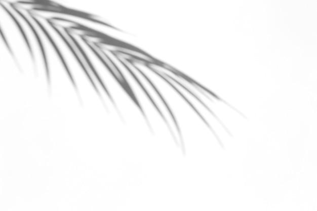 Schaduw-overlay-effect. schaduwen van palmbladeren en tropische takken op een witte muur in zonlicht.