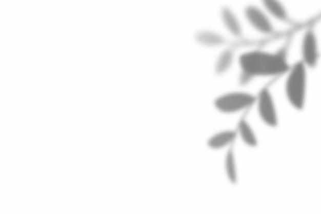 Schaduw van bladbekleding op witte textuurachtergrond. gebruik voor decoratieve productpresentatie.