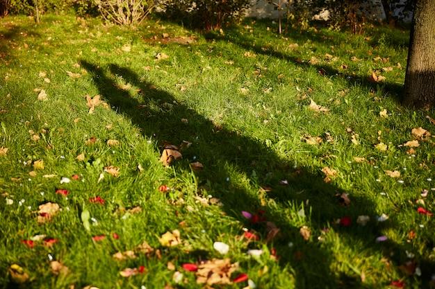 Schaduw van geliefden op het gras. herfstbladeren