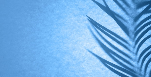 Schaduw van palmblad in klassieke blauwe achtergrondverlichting. floral monochrome achtergrond