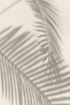 Schaduw van palmbladeren ontwerpelement