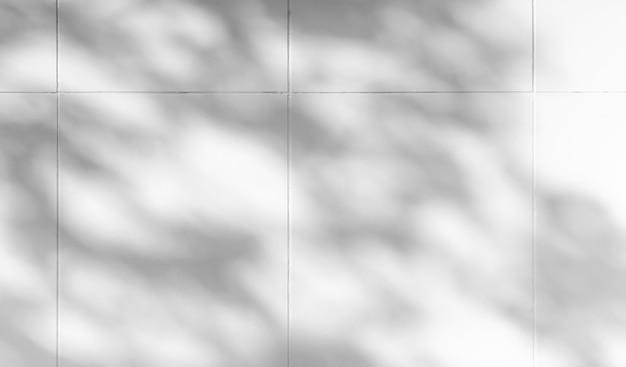 Schaduw van takbladeren op witte muurachtergrond. voor decoratieontwerp