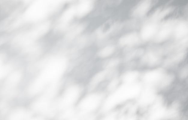 Schaduw van takbladeren op witte muurachtergrond