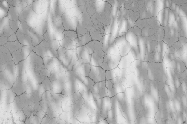 Schaduw van takken en bladeren op een witte muur