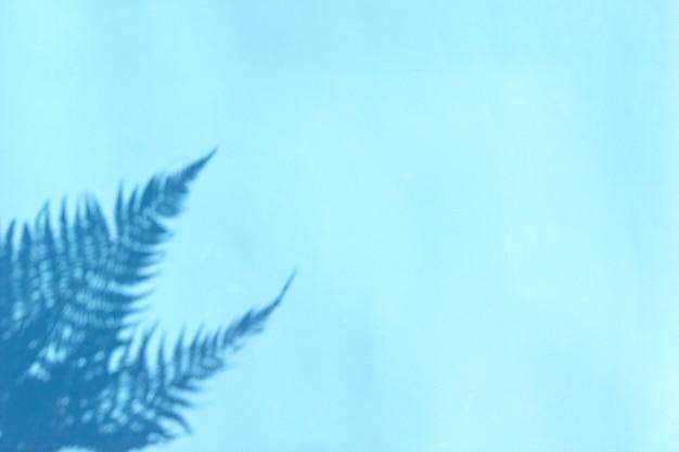 Schaduw van takken van varenbladeren op lichte achtergrond.