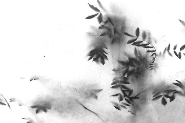 Schaduwen van bladeren op bomen als vintage vuile textuur of achtergrond