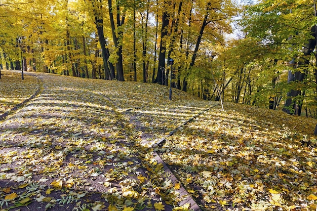Schaduwen van boomstam op pad bezaaid met gele esdoornbladeren in herfst stadspark.