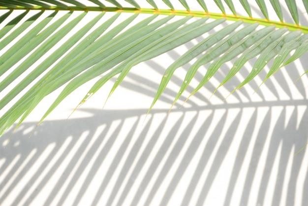 Schaduwen van palmbladeren op een betonnen muur