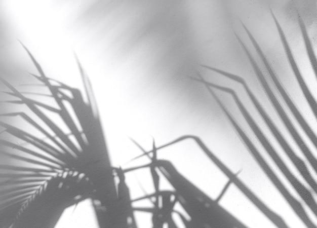 Schaduwen van tropische bladeren op het muuroppervlak
