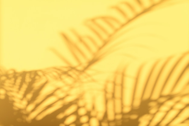Schaduwen van tropische palmbladen op achtergrond van de pastelkleur de gele muur.