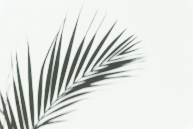 Schaduwpalm overlay achtergrond wazige schaduw van een tropische tak van een palmboom