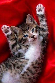 Schattig glimlachend gestreepte kitten met poten omhoog liggend op de rug over rode textiel. camera kijken.