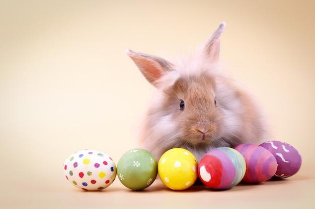 Schattig harige konijn met veel paaseieren