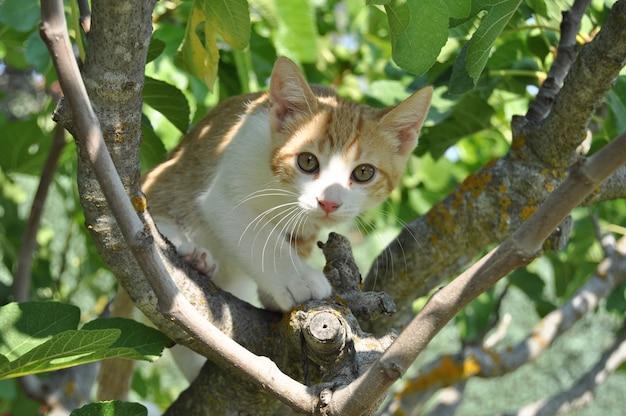 Schattig katje met expressieve ogen