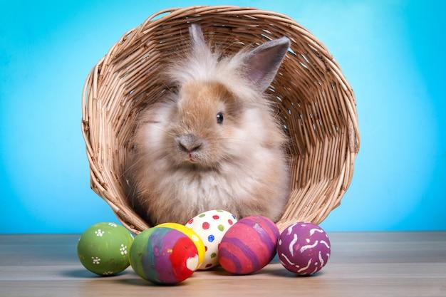 Schattig klein konijn in een mand versierd met kleurrijke eieren happy easter!