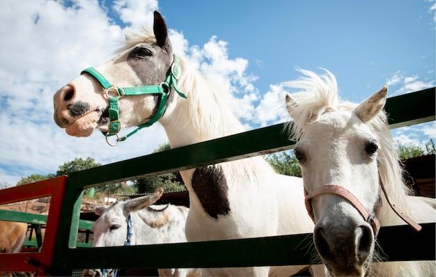 Schattig paard op de boerderij buiten