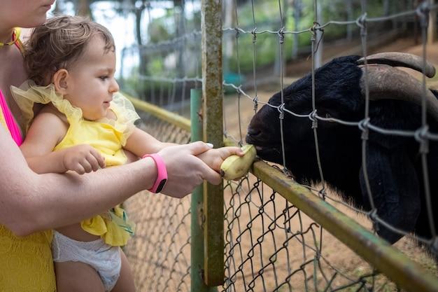Schattig schattig peutermeisje met moeder die geit voedt op een kinderboerderij die dieren aait in de dierentuin