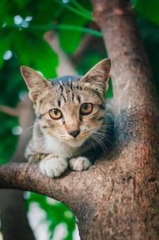 Schattig tabby kitten ontspannen op de top van boom.