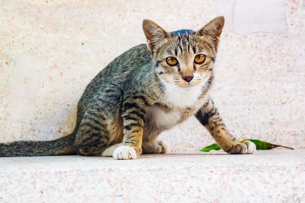 Schattig tabby kitten ontspannen op tafel.