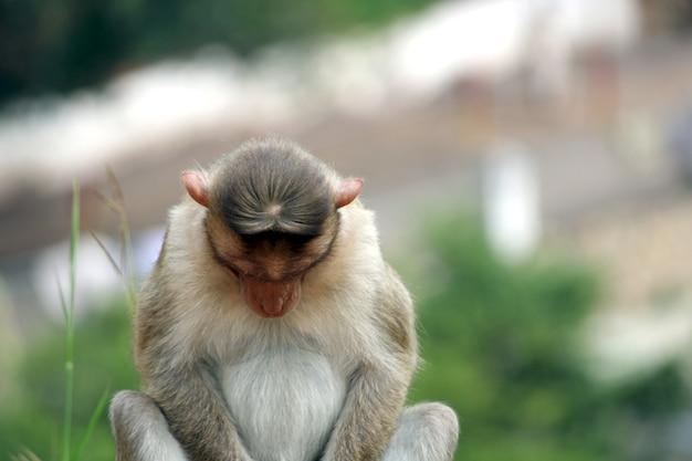 Schattige aap close-up apen die in het wild leven