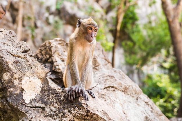 Schattige aap leeft in een natuurlijk bos van thailand.