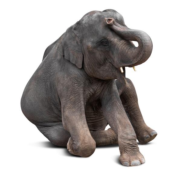 Schattige baby aziatische olifant in verschillende actie geïsoleerd