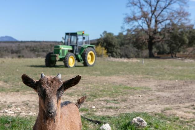 Schattige babygeiten in een boerderij